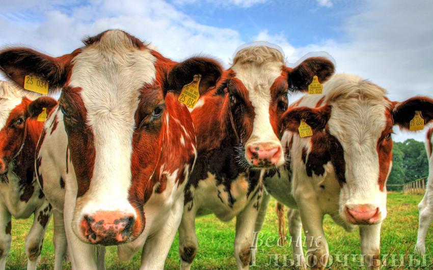 идентификация-сельхозживотных