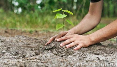 С 1 по 8 апреля по инициативе Министерства лесного хозяйства пройдет традиционная добровольная акция «Неделя леса-2017»