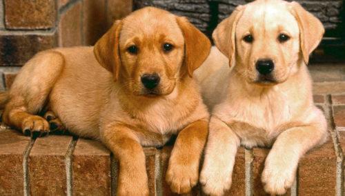 Эксперты: владельцы собак здоровее