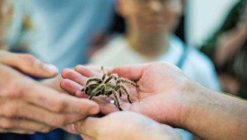 выставка пауков
