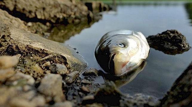 мор рыбы