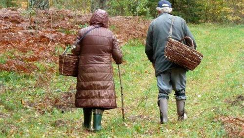 Старики в лесу