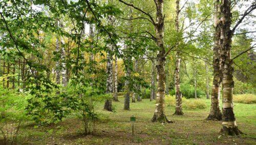 Глубокский лесхоз