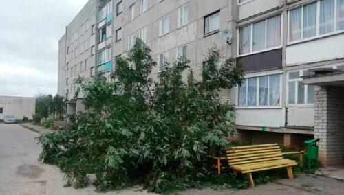 ФОТОФАКТ: В Глубоком сильный ветер повалил деревья
