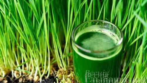Какая польза от поедания богатой хлорофиллом пищи? Ответ у китайских специалистов